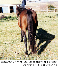 南関東初の3冠馬ヒカルタカイ | ...
